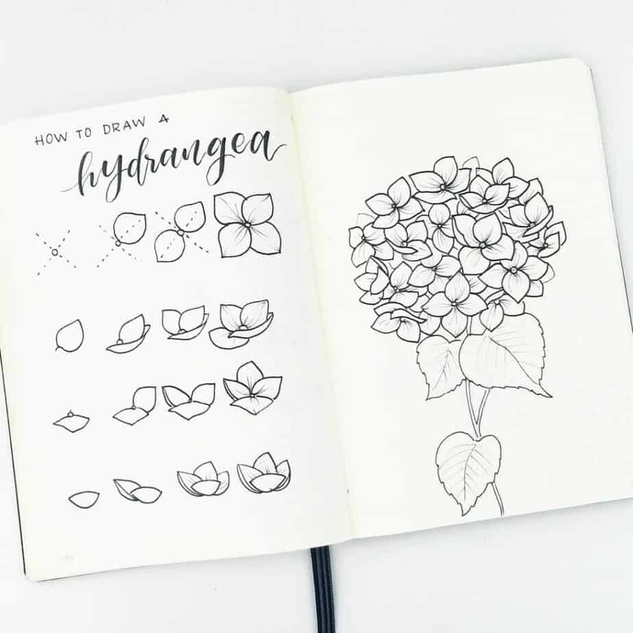 How to draw a hydrangea.