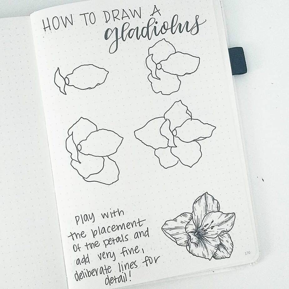 How to draw a gladiolus.