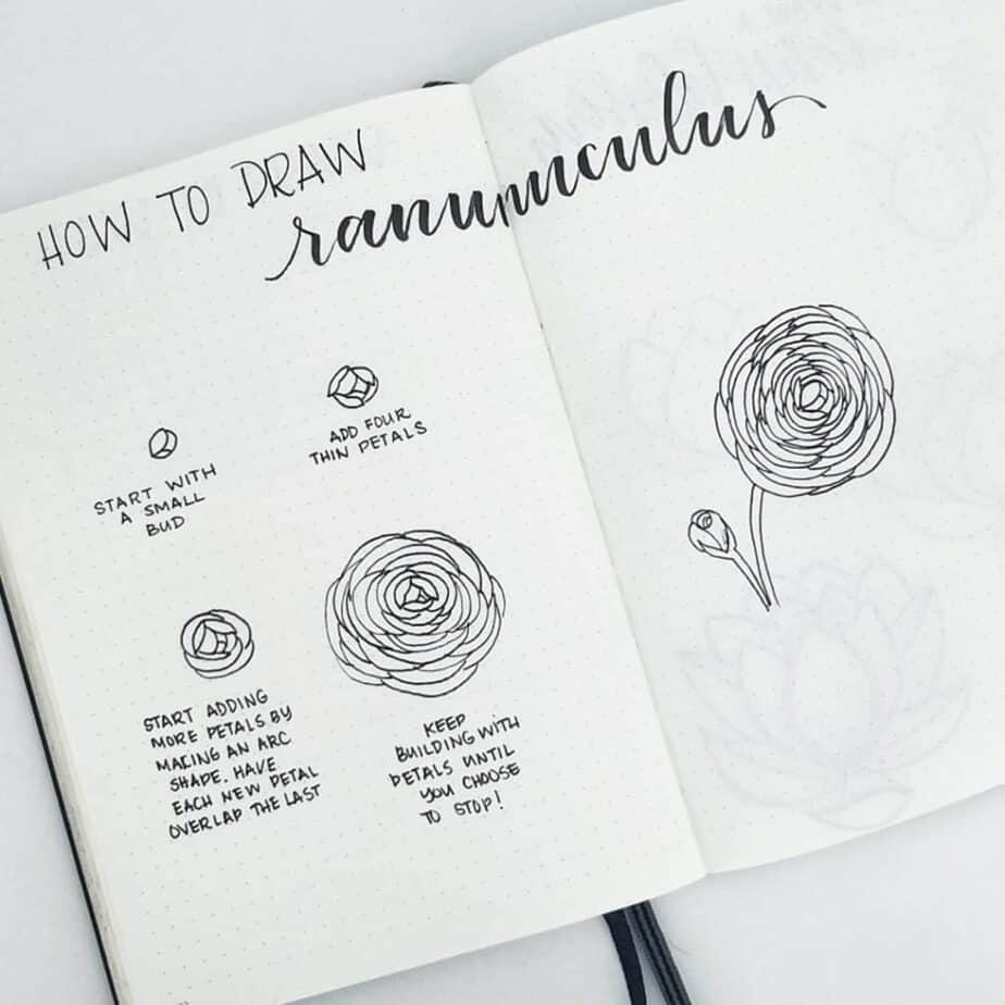 How to draw ranunculus flower doodles.